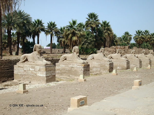 Avenue of Sphinx, Luxor Temple, Luxor