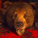 Bear rug at Balfour Castle