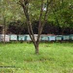 Bee hives in Georgia