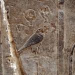 Bird, Karnak Temple, Luxor