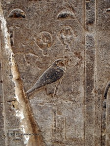 Bird, Karnak Temple, Luxor