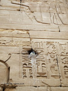 Bird nesting, Temple of Horus, Edfu