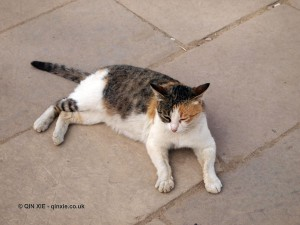 Cat, Karnak Temple, Luxor