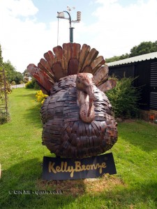 Giant turkey, Kelly Bronze, Essex