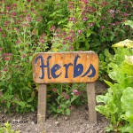 Herb garden at Balfour Castle