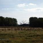 Landscape at Snape Maltings, Aldeburgh, Suffolk