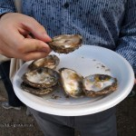 Oysters at Aldeburgh Food and Drink Festival, Snape Maltings, Aldeburgh, Suffolk