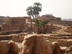 Resting bird, Karnak Temple, Luxor