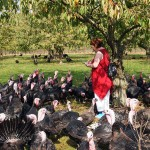 Turkey gather around red at Copas farm