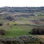 Vineyard, Pescara, Abruzzo