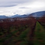 Vineyard, Geneva