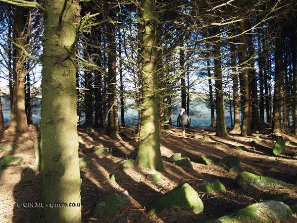 Walking in the woods in Cornwall
