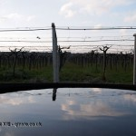 Water reflecting vines, Pescara, Abruzzo