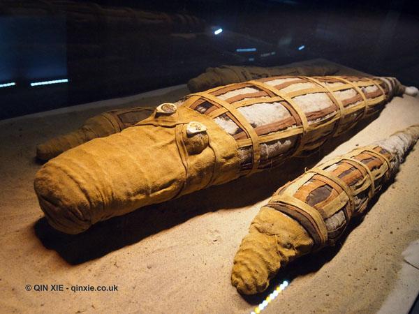 Mummified crocodile, Crocodile Museum, Kom Ombo