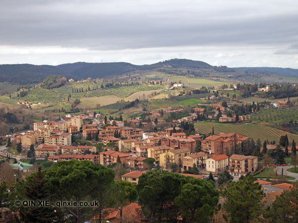 Town vineyard, San Gimignano, Italy