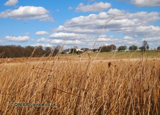 Long grass, Richmond Park